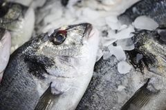 Fresh fish in a col counter with ice. Ready to be sold in a fishshop Stock Images