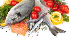 Fresh fish collection. Stock Photography