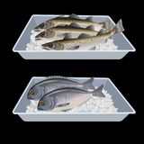 Fish in container boxes. vector illustration