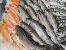 Fresh fish on the counter royalty free stock photos