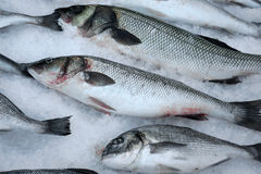 Fresh fish on crushed ice. Royalty Free Stock Photography