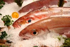 Fresh Fish Display. Fresh Fish on ice in a shop Royalty Free Stock Images