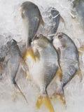 Fresh Fish display Royalty Free Stock Photography