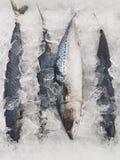 Fresh Fish display Stock Photos