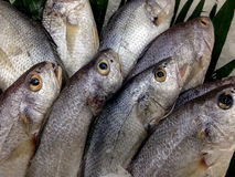 Fresh Fish in the Display on the Market Stock Photo