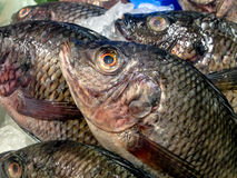 Fresh Fish in the Display on the Market Royalty Free Stock Photography
