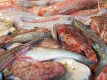 Fresh fish on display. In market. Palma de Mallorca, Balearic islands, Spain Stock Images