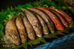 Fresh fish on display stock image