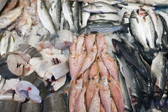 Fresh fish on display on marketstall in the netherlands Royalty Free Stock Photography