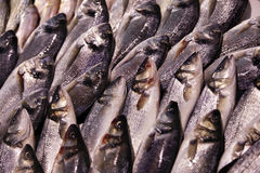 Fish for Sale Royalty Free Stock Image