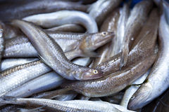 Fish for Sale Stock Photos
