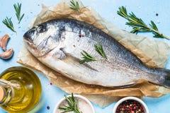 Fresh fish dorado on blue background. stock image