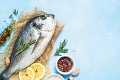 Fresh fish dorado on blue background. stock images
