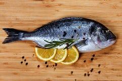 Fresh fish dorado close-up. Fresh fish dorado on wooden background Stock Images