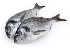 Fresh fish dorado isolated on white Stock Images