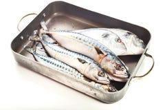 Fresh fish Dorado and Mackerel Royalty Free Stock Image