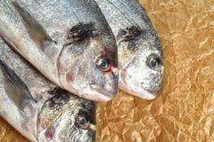 Fresh fish Dorado Stock Image