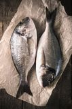 Fresh fish dorado on the parchment paper on the wooden table. Top view with copy space.  Royalty Free Stock Photos