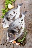 Fresh fish dorado Royalty Free Stock Photography