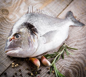 Fresh fish dorado Royalty Free Stock Images