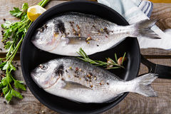 Fresh fish dorado Royalty Free Stock Photo