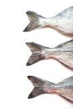 Fresh fish Dorado tails Royalty Free Stock Image