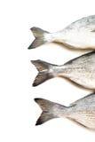 Fresh fish Dorado Stock Images