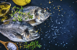Fresh fish dorado top view spicy herb Stock Photos