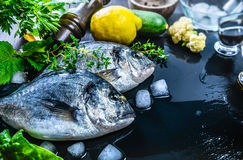 Fresh fish dorado top view spicy herb Royalty Free Stock Photo