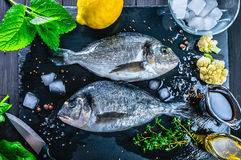 Fresh fish dorado top view spicy herb Royalty Free Stock Photography