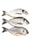 Fresh fish Dorado Royalty Free Stock Image