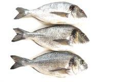 Fresh fish Dorado Stock Photos