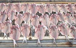 Fresh fish is drying in the sun, gastronomy in Hong Kong