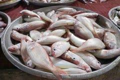 Fresh fish at farmers seafood market. Samui island, Thailand Royalty Free Stock Photography
