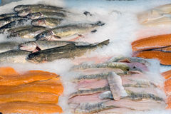 Fresh fish fillets on ice for sale Royalty Free Stock Photos