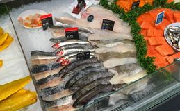 Fresh fish. Fish counter in a superstore. Stock Images