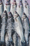 Fresh fish at a fish market Royalty Free Stock Images