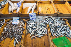 Fresh fish at the fish market. Different kinds of fish are sold at the fish market Royalty Free Stock Images