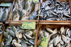 Fresh fish - fish market Stock Photo