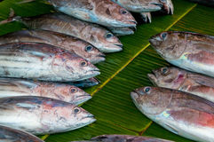 Fresh fish at a fish market Stock Images