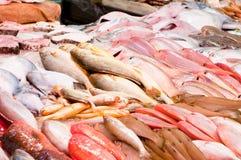 Fresh fish at a fish market royalty free stock photos