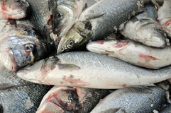 Fresh fish in a fish market Stock Images