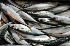 Fresh fish in a fish market Royalty Free Stock Image