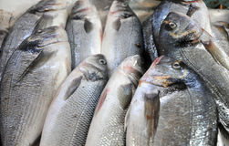 Fresh fish in a fish market Royalty Free Stock Images