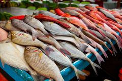 Fresh Fish on the Fish Market in Borneo Malaysia. Fresh Fish on the Fish Market in Borneo / Sandakan Malaysia Stock Photos