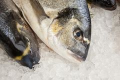 Fresh fish in the fish market. Close up of fresh fish in the fish market stock images