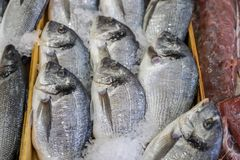 Fresh fish in the fish market. A limbless cold-blooded vertebrate animal with gills and fins and living wholly in water Royalty Free Stock Image
