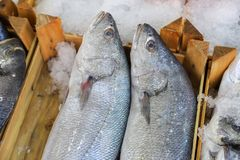 Fresh fish in the fish market. A limbless cold-blooded vertebrate animal with gills and fins and living wholly in water Stock Photography