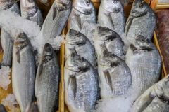 Fresh fish in the fish market. A limbless cold-blooded vertebrate animal with gills and fins and living wholly in water Royalty Free Stock Photo