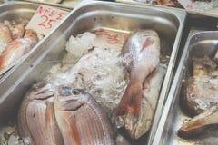 Fresh fish in the fish market - Greece Stock Photo
